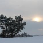 Sneeuw, vorst en zon